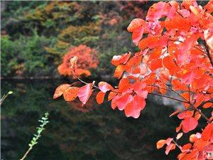 石龙沟红叶