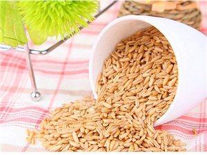 营养健康的米奇燕麦杂粮粥