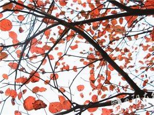 酉阳红叶已漫山红遍,就等你来!!!