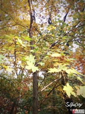 晚秋的百望山,美好的人儿享受美好的风景!