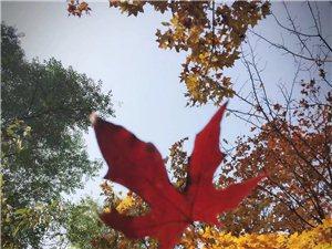 晚秋的百望山,美好的人�合硎苊篮玫娘L景!