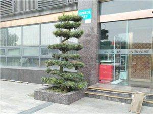广汉华亮园艺推荐美食集聚地-鸭子河畔、湿地公园旁,名家坊中餐厅