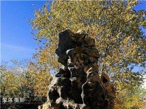 德令哈,秋色中一座美丽的城(图)