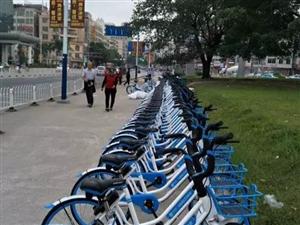 高州街头一夜之间出现好多共享单车,但发现城管在收车……