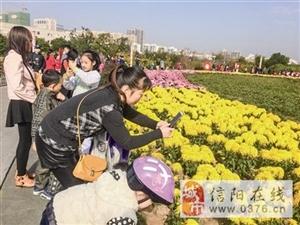 百花园3000余盆菊花绽放 预计花期还能持续两周左右