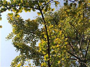 安州文化广场秋冬景色