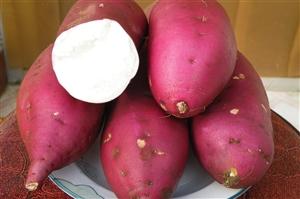 有要100亩红薯的吗?(保定高阳)