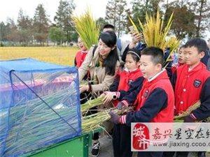 亲子割稻打谷 体验农耕文化