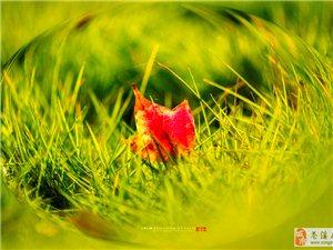 【用落叶画一个美丽的秋天】