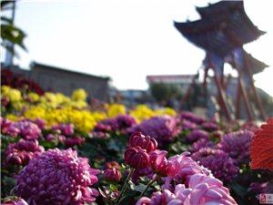 澳门葡京平台县第二十七届菊花节掠影
