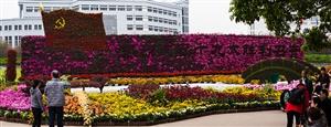 上海大学菊展掠影