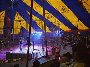 世博首届马戏团仅剩最后3天时间了,没看的朋友可要抓紧时间,真的好看..
