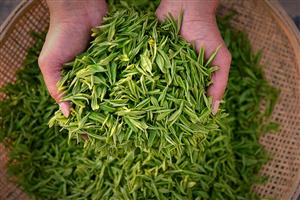 """一起围观:""""茶界新宠""""虔茶是如何炼成的?"""