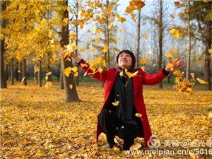 【大美澳门威尼斯人游戏网站】张集银杏叶正黄时!