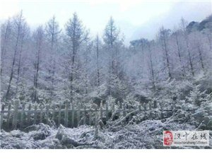 好美!汉中留坝紫柏山今日迎冬雪