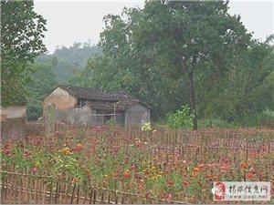 小乡村变网红地刷爆朋友圈,村民盛赞幸福感倍儿增