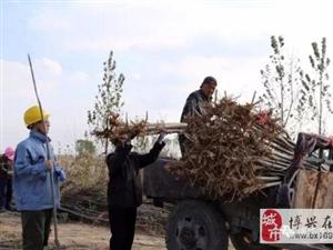 十年树木,博华秋季种植会战方兴日盛