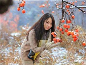 彬县摄影大师朱民乐镜头下柿园初雪景色,网友惊叹!柿园美,人更美