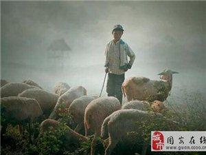 放羊的故事!