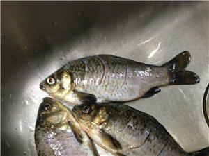 养生鲫鱼汤