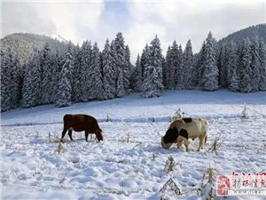 今日小雪   一片飞雪一片寒