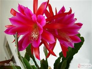 花卉诗词六首