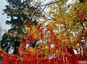中山寺的�y杏��!