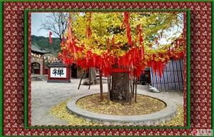 中山寺的�y杏�洌�