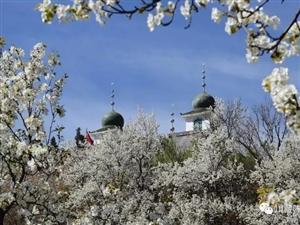 【2018大拇指户外】春风三月邀你共赏梨花、桃花。