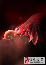 超详细的各阶段胎儿发育图 原来肚子里的宝宝是这样(一)