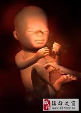 超详细的各阶段胎儿发育图 原来肚子里的宝宝是这样(二)