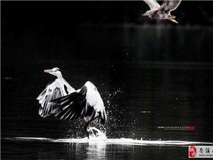 水上芭蕾《二》