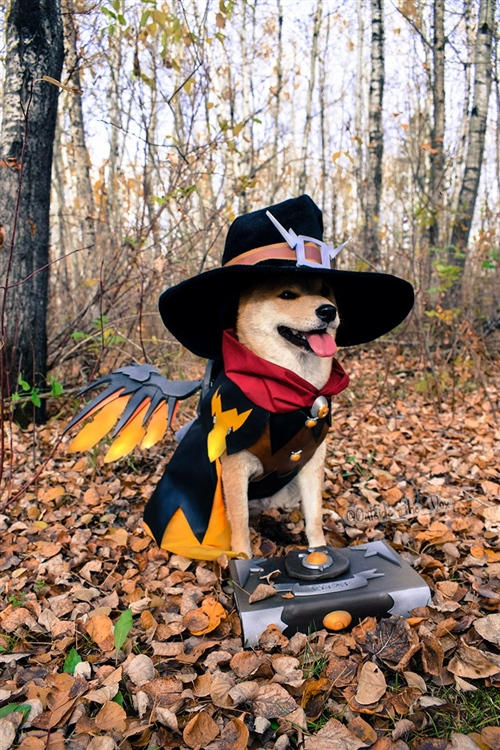 一只宠物狗COS了阿尔萨斯这才是名副其实的巫妖汪