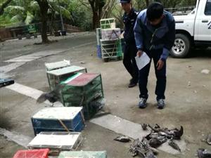 茂名多名非法贩卖野生鸟类人员被抓获,查获野生鸟类566只!