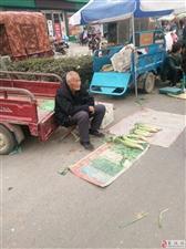 麦岭镇集会图集(三)