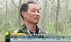 """【洞庭湖生态环境治理】汉寿""""种树能手""""砍树守护候鸟家园(内附央视视频)"""