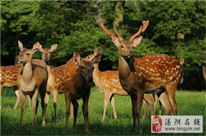 长春观新建小动物乐园 明年春天带小朋友来长春观看羊驼了