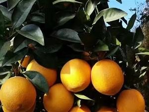 正宗赣南脐橙(有需要加微信:np0201   )