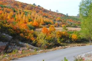 金色秋天――换了彩妆的隰(xi)县石马沟