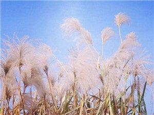 湿地公园随手拍,只要留心处处皆美景!