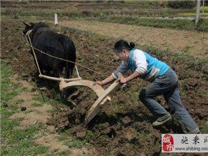 施秉农村:男人们外出打工了, 留守妇女就在家包下所有的农活