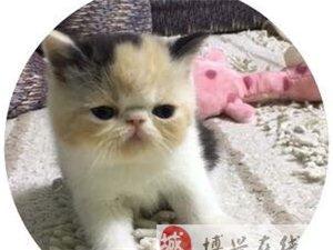 我家的大脸猫,家里养了好多加菲猫,各种丑萌,每天跟他们一起玩都好开心