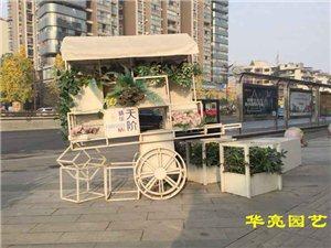 再来一组地高天阶汇的花草组合花架-广汉华亮园艺种植场栽种(图片)