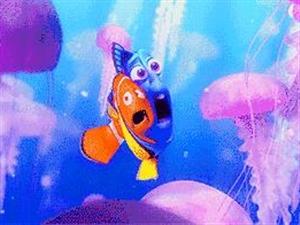 【29元|海洋馆】29元去中赫海洋馆,与小海豚一起探秘海底世界!