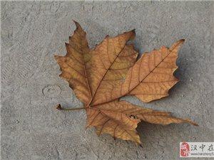 落叶飘洒,时间飞速,秋去冬来