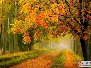我在秋里,等风,也等你!
