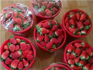 自家草莓,新鲜好吃,欢迎选购