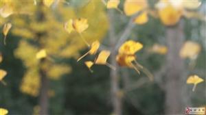 初冬,金黄色的长兴