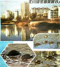 北川河的冬季令人醉