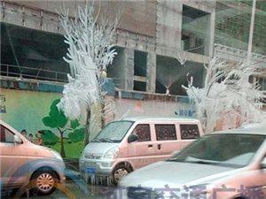 """冷!郑州街头树木成""""冰棍"""""""